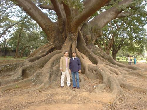バンガロールのボタニカル・ガーデンで樹齢800年と言われる巨木の前でチャタルジー君と